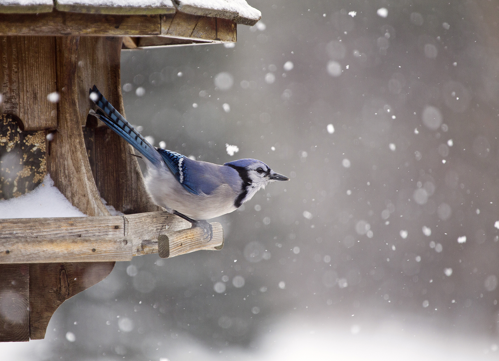 WINTER CARE FOR BIRDS