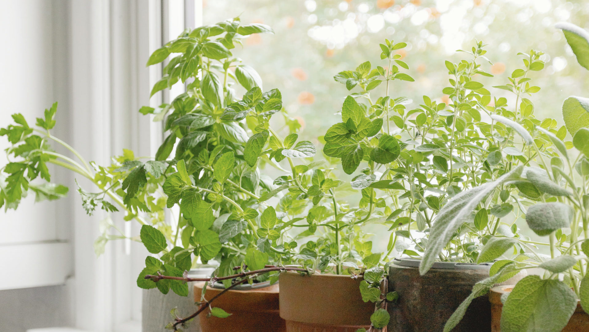 herbs in containers on kitchen windowsill